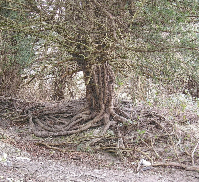 The Yews of Bredhurst (Church, Village and Woodland)